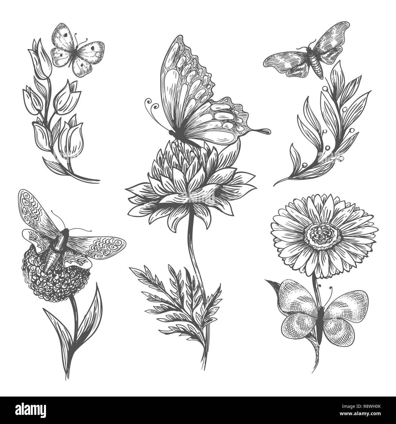 schmetterling pflanze doodle vektor skizze abbildung von
