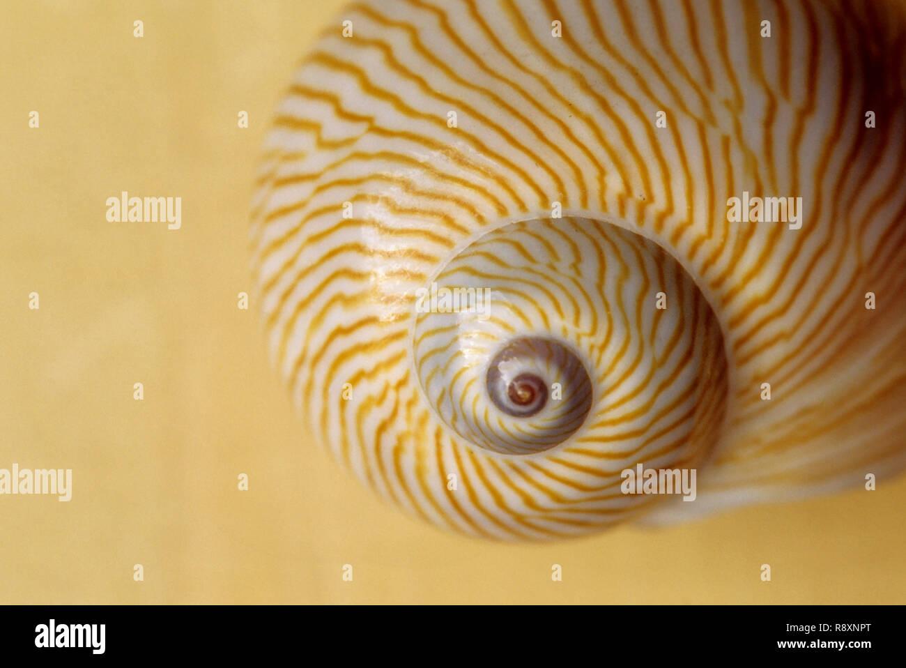 Nahaufnahmen von Shell, Konzept, Indien Stockbild