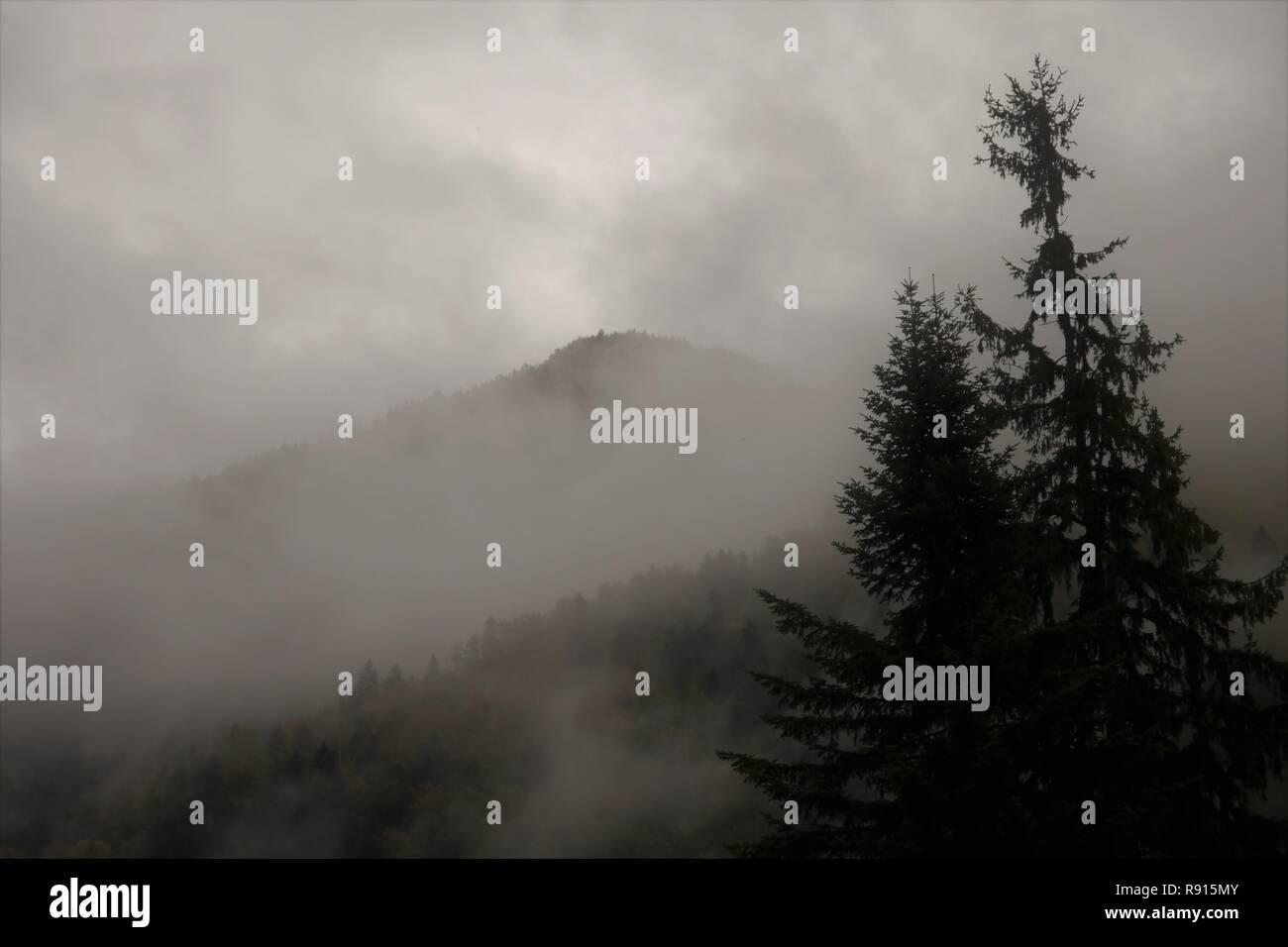 Nebligen Wald in Mazedonien Stockbild