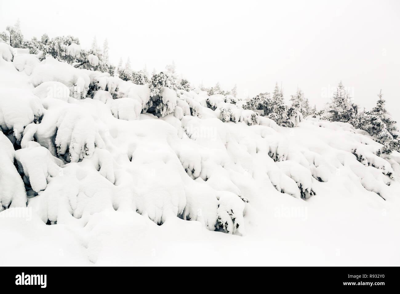 Winter Forest, weiße Bäume inspirierende Landschaft. Tiefschnee auf Pinien. Schönen inspirierenden Szene mit kopieren. Stockbild