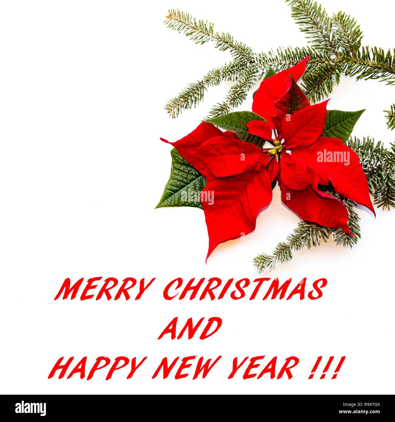 Weihnachtsstern Für Tannenbaum.Weihnachtsstern Blume Mit Tannenbaum Und Schnee Auf Weißem