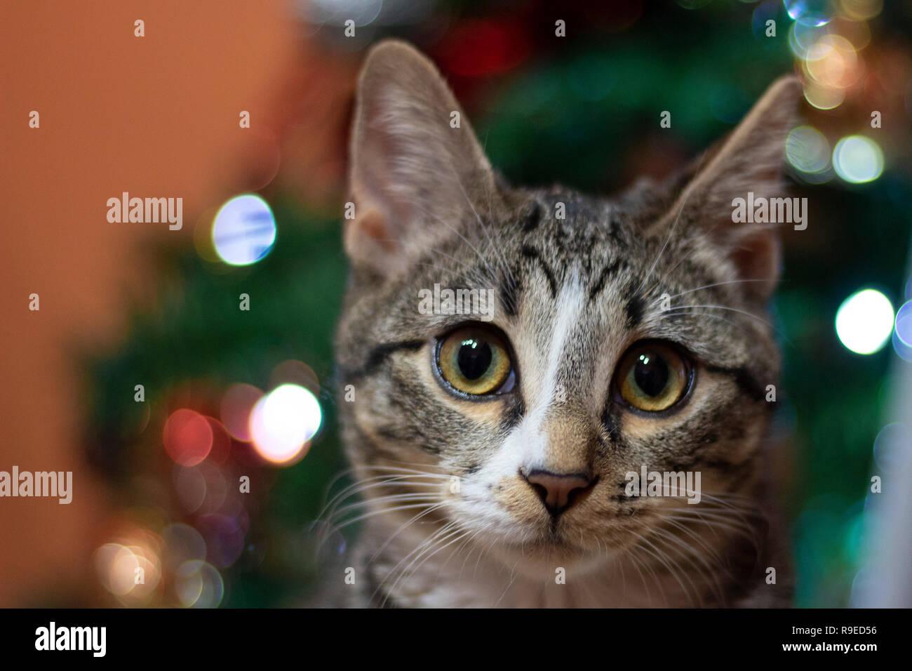 Frohe Weihnachten Katze.Sehr Süße Katze Wünschen Ihnen Frohe Weihnachten Stockfoto Bild