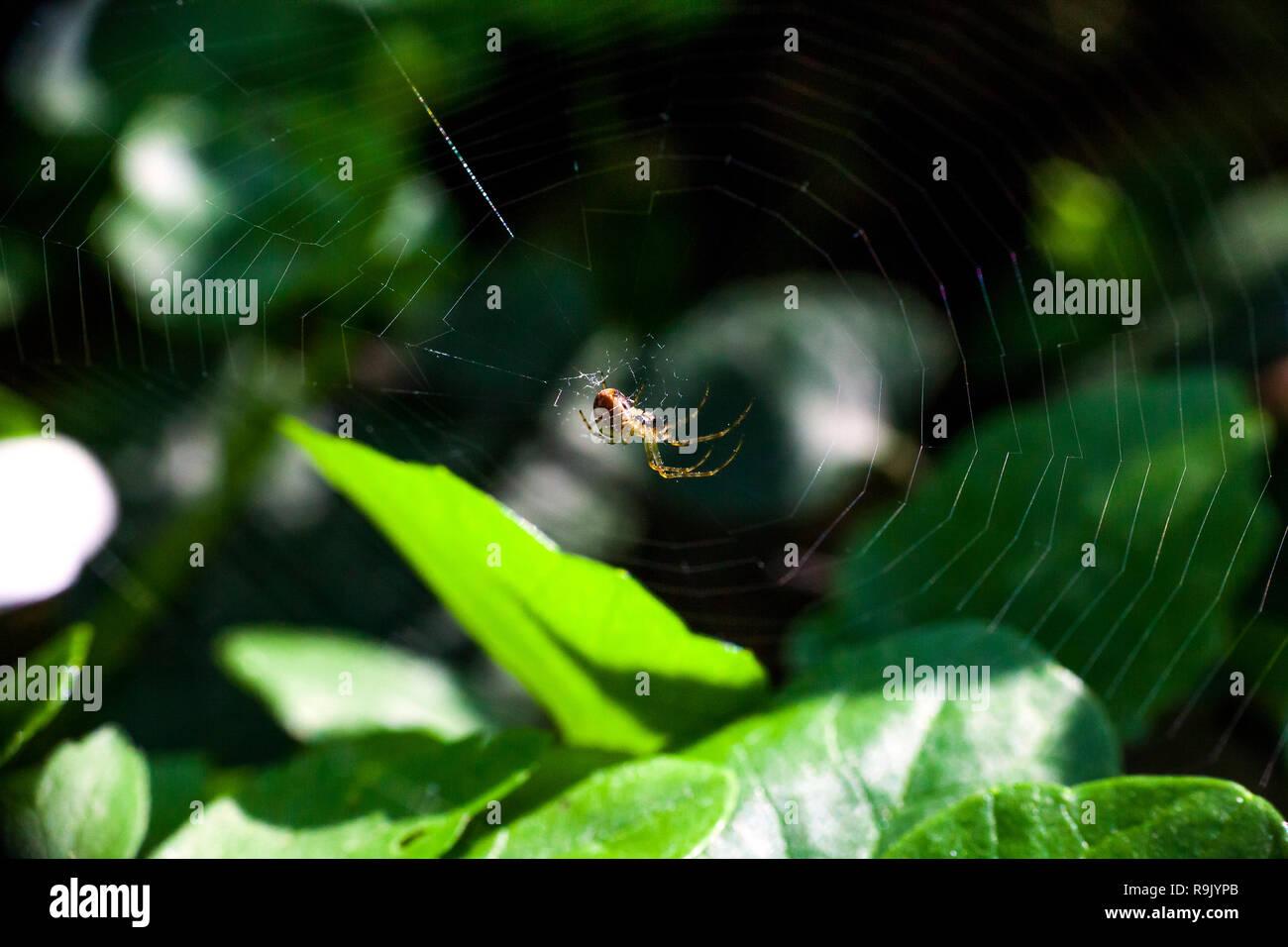 Weberei Spinnennetz im Sommer Wald Stockbild