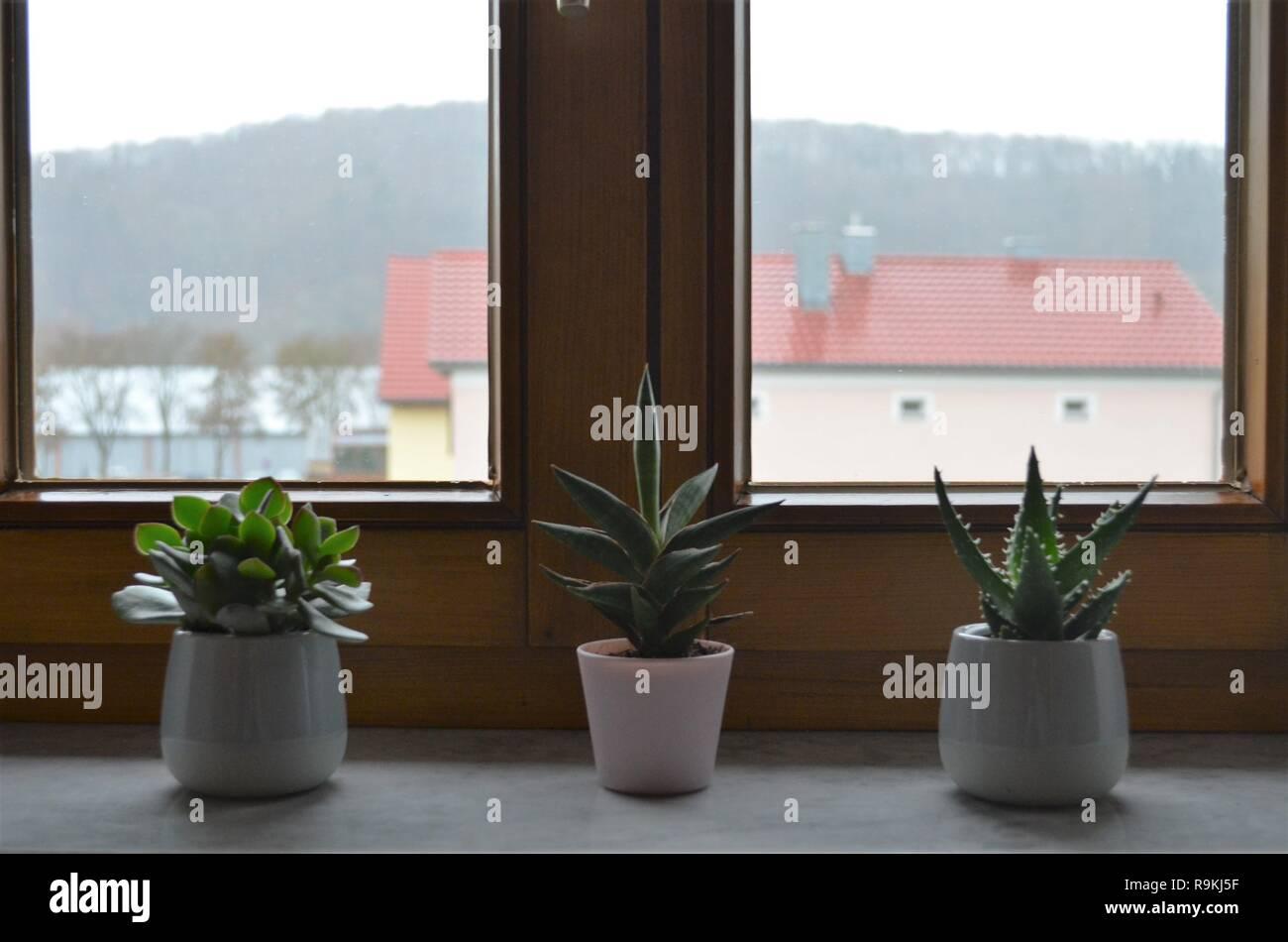 Drei Kakteen Auf Der Fensterbank In Einer Reihe Als Dekoration Inspirierende Idee Fur Das Schlafzimmer Stockfotografie Alamy