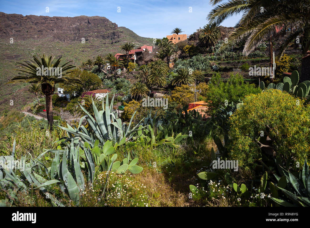 Dorf Masca auf Teneriffa, Kanarische Inseln, Spanien Stockbild