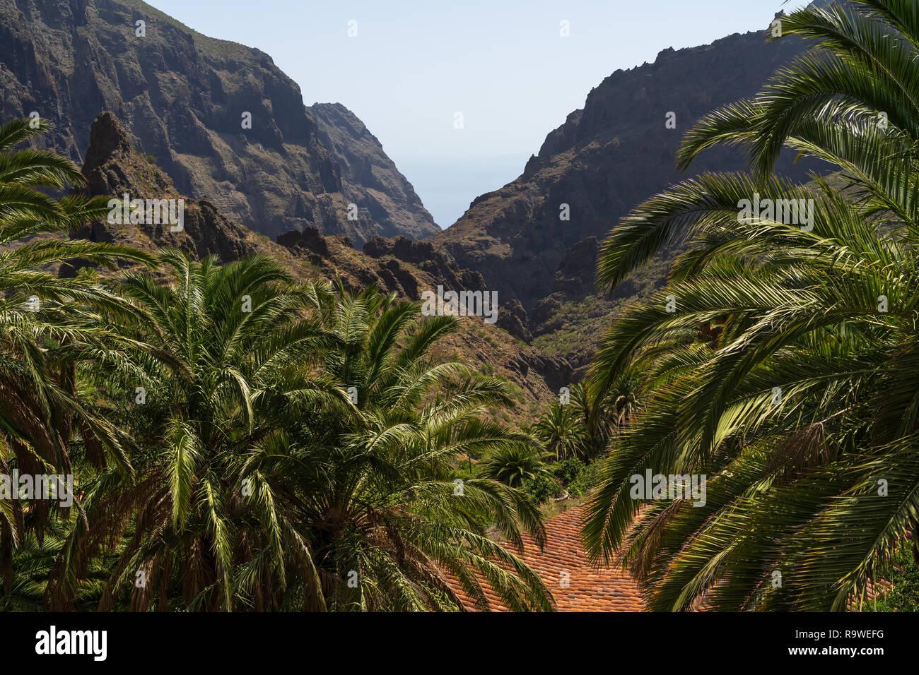 Die Vew der den Berg Macizo de Teno Gebirge und Masca Schlucht. Teneriffa. Kanarischen Inseln. Spanien. Stockbild