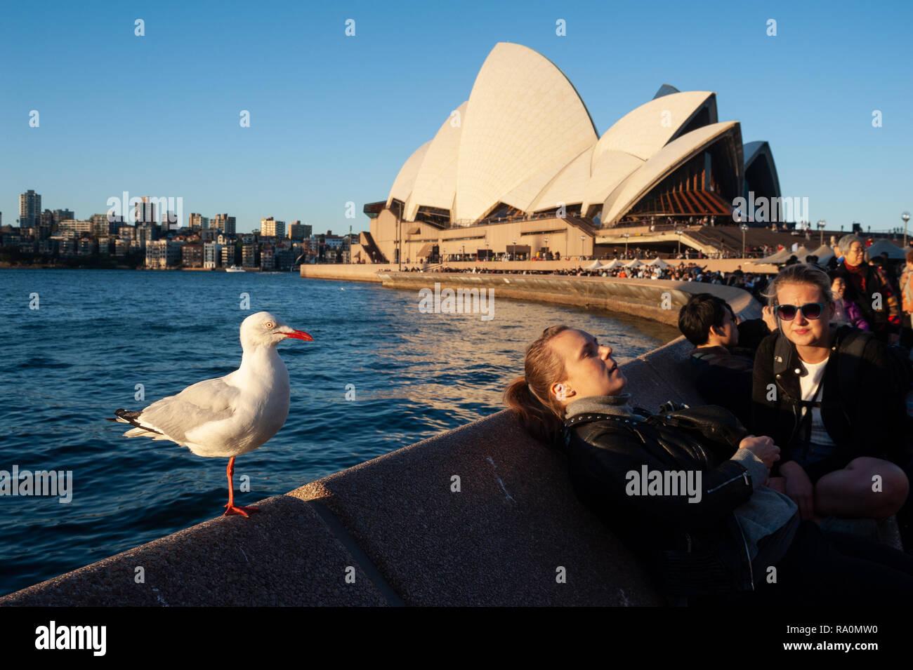 16.09.2018, Sydney, New South Wales, Australien - Menschen geniessen zusammen mit Moewe sterben Abendsonne in einem strassencafe am Circular Quay, w Stockbild