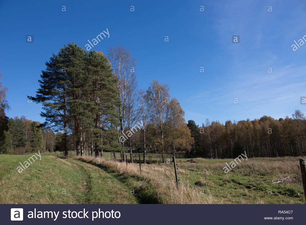 Sommer in Schweden mit blauem Himmel und Sonnenschein Stockbild