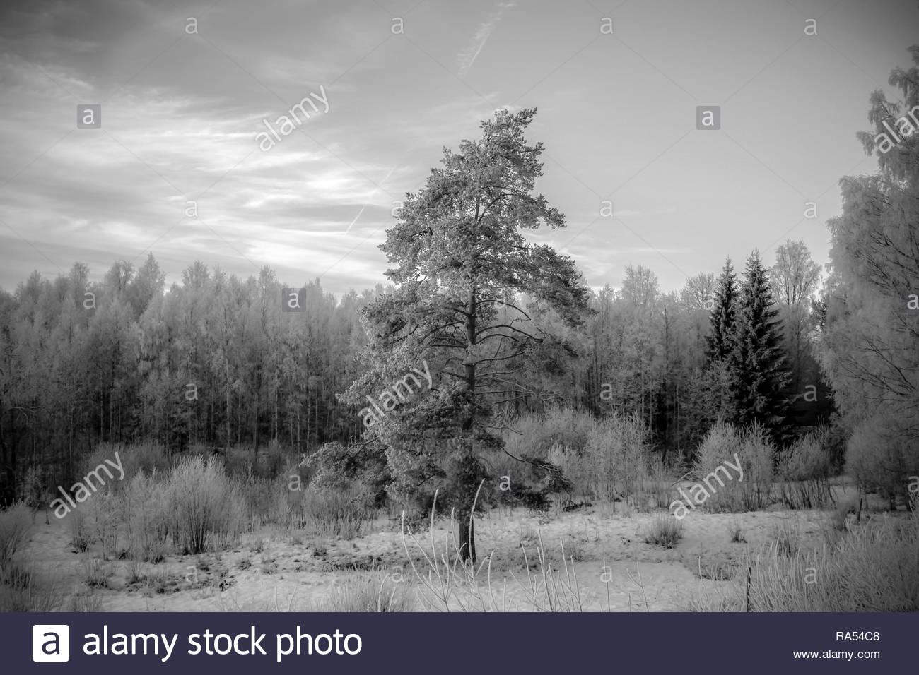 Swedshz Winterlandschaft in Schwarz und Weiß Stockbild