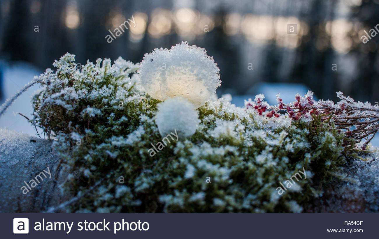 Gefrorene Seifenblasen mit Rauhreif und Schnee liegen auf Moos und mit Sonnenlicht beleuchtet Stockbild