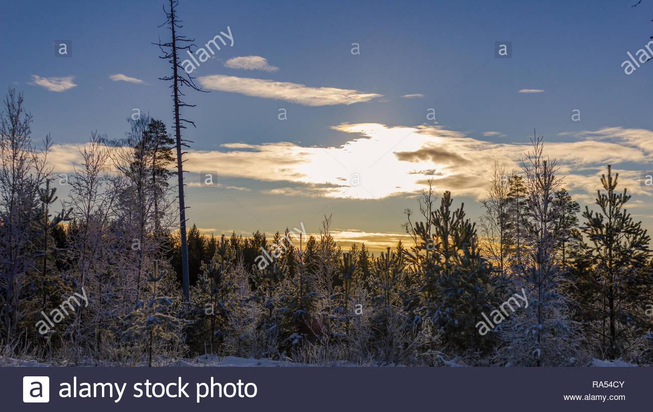 Winter Spaziergang durch die schwedische Natur an einem sonnigen Tag Stockbild