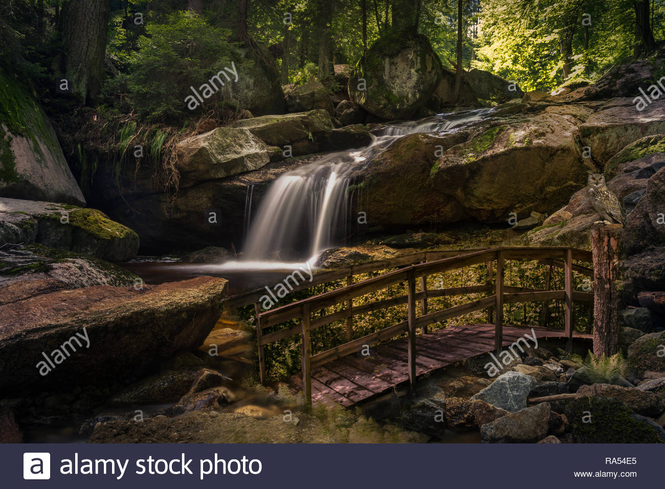 Deep Forest mit Wasserfall, Holzbrücke, Felsen und einer Eule Stockbild