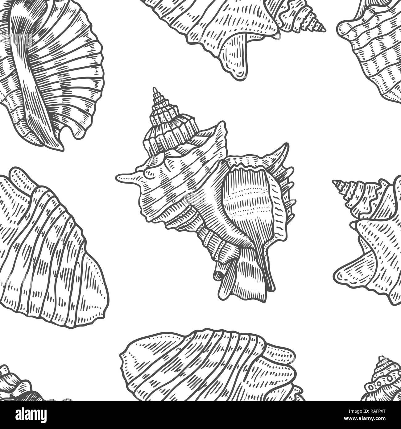 Black White Drawing Starfish Stockfotos Black White Drawing