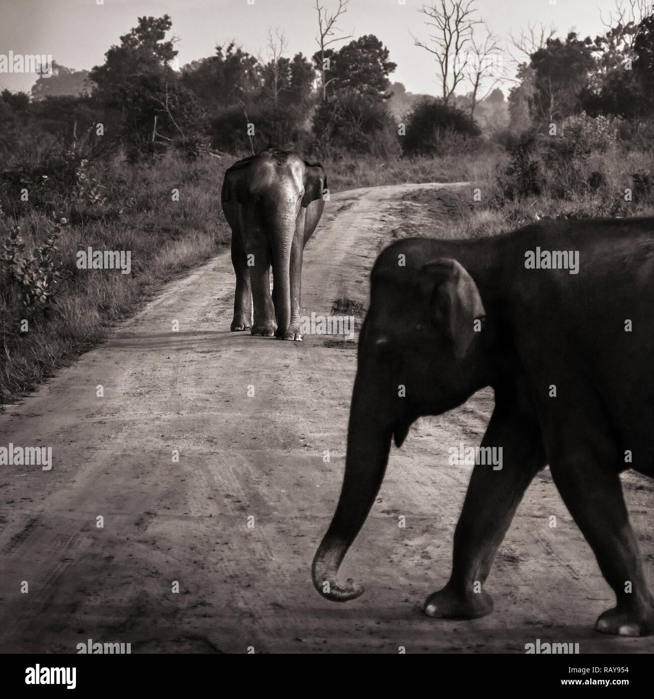 Suchergebnis auf für: roten Elefanten: Schuhe