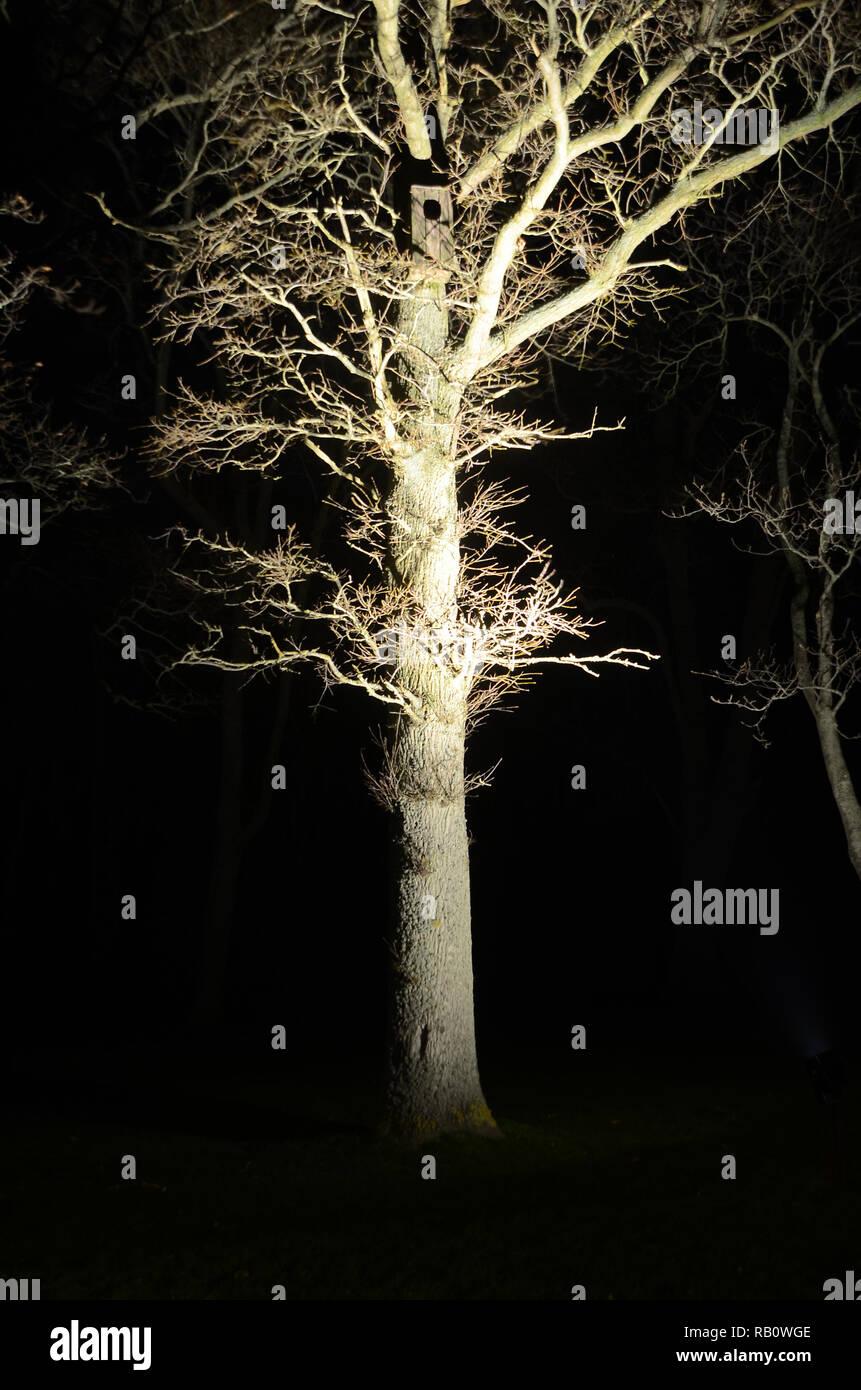 Baum beleuchtet von unten mit einem Projektor. Wird die Eulen in der owlcase schätzen die Spotlight? Stockbild