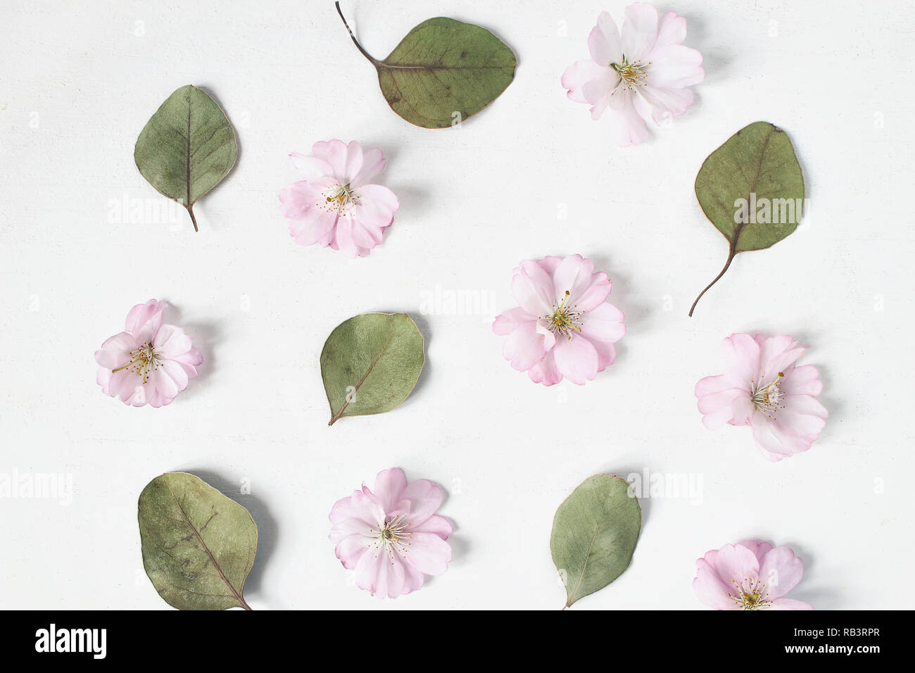 Feminine floralen Muster. Trockenen eukalyptus Blätter und Rosa japanische kirsche baum Blüten auf alte weiße Holztisch Hintergrund. Flach, Ansicht von oben. Stockfoto
