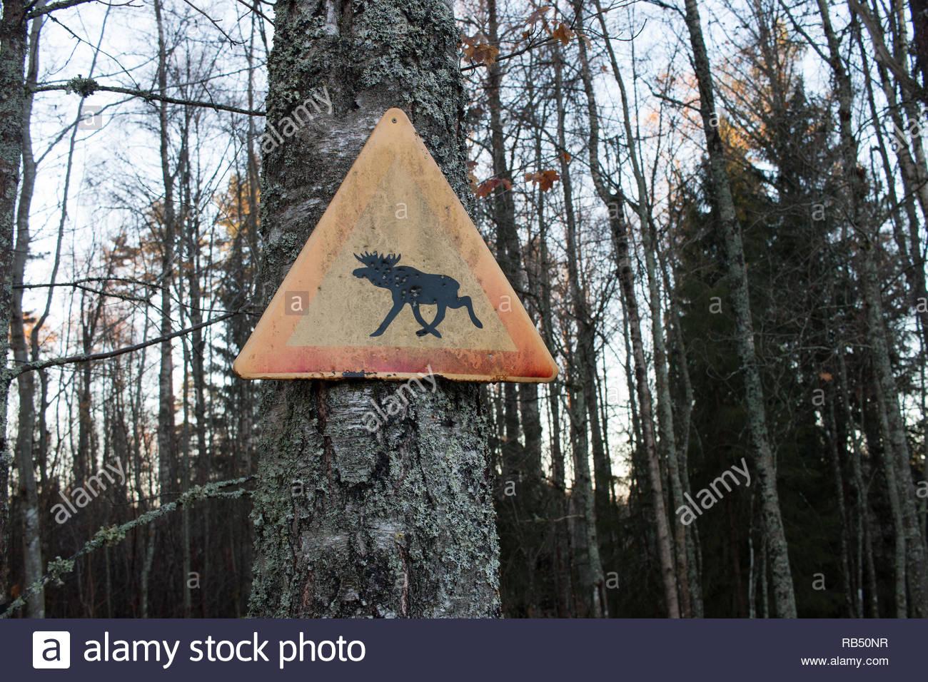 Schild warnt für Elche im schwedischen Wald Stockbild