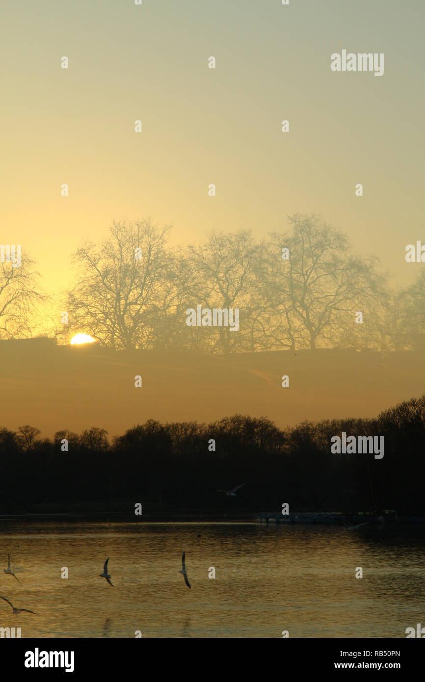 Sonnenuntergang Bild mit Bäumen und Vögeln Möwen fliegen und Wasser im Vordergrund. Bild würde für ein Buch geeignet. Moody Buch deckt. Sonnenuntergang. Misty Abend. Ruhig. Frieden. Ruhe. Cool. Abend. Atmosphäre. Stockbild