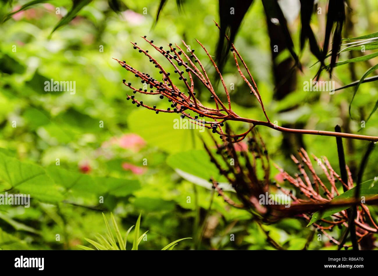 Typische Zimmerpflanze Stockfotos Typische Zimmerpflanze Bilder