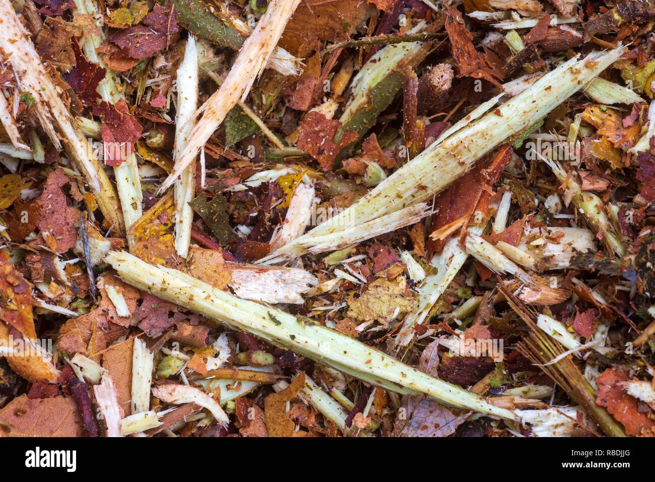 Ein Bild von einem ramial Holzspäne (RCW) Heap. Als Mulch verwendet, die Hackschnitzel dienen den Boden biologische Aktivität wieder in Kraft zu setzen. Stockbild