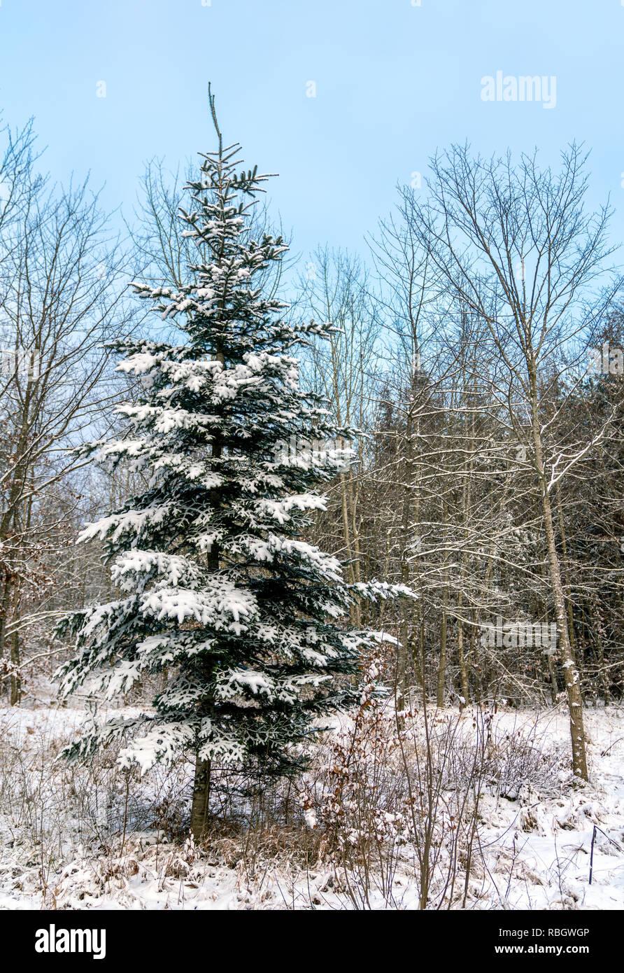 Winter Forest in der Schwäbischen Alb, Deutschland Stockbild