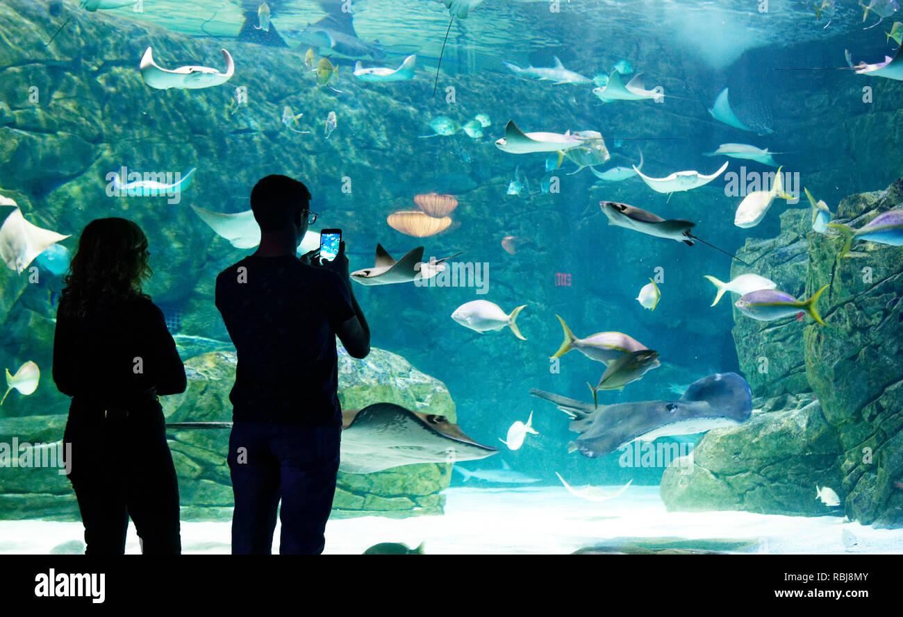 Die Leute, die Fotos von der Ray Bay in Ripley's Aquarium von Kanada, Toronto, Ontario Stockbild