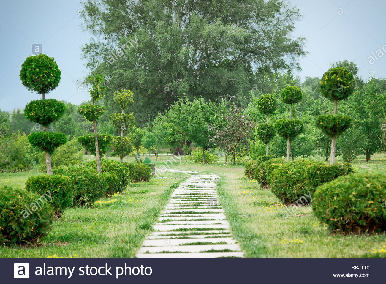 Zierbäume Im Botanischen Garten Mit Pfad Landschaftsgestaltung