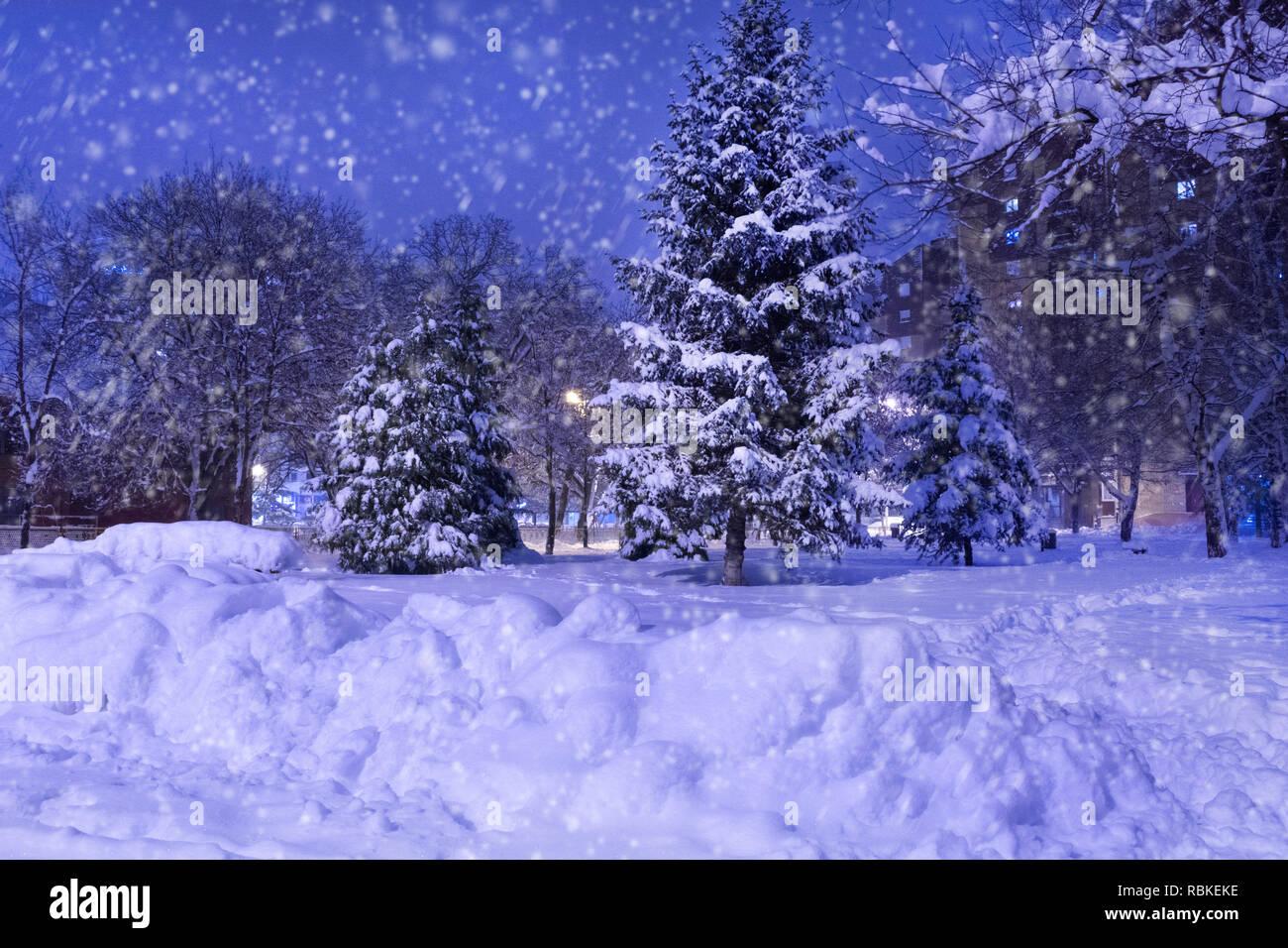 Tannenbaum Der Schneit.Winter Park In Der Nacht Mit Großen Schnee Mit Tannenbaum Abgedeckt