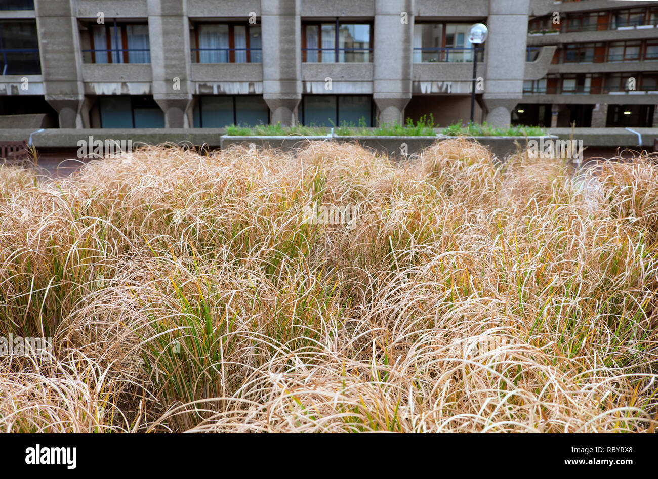 Barbican Garten Stockfotos Barbican Garten Bilder Alamy