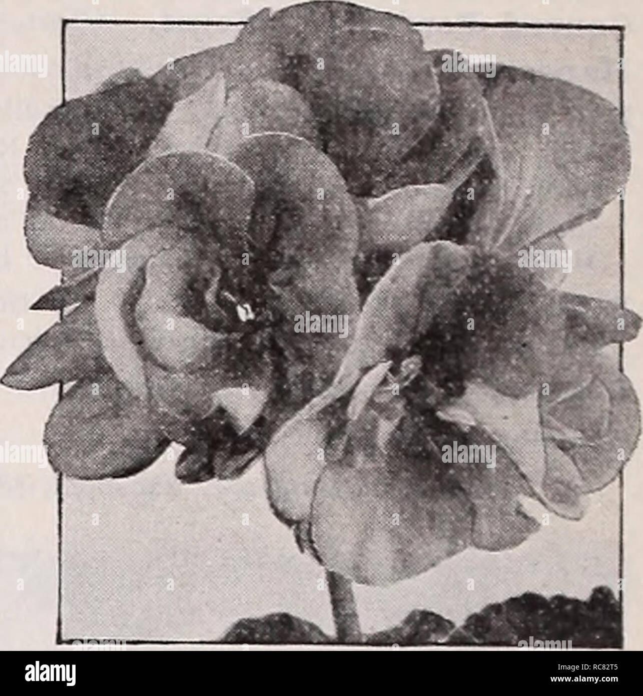 Dreers Garten Buch 1939 101 Jahre Dreer Qualität Samen Pflanzen