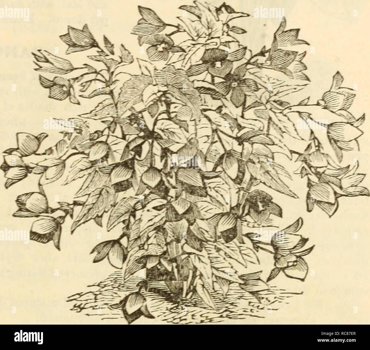 Dreers Garten Kalender 1883 Samen Kataloge Baumschulen Kataloge