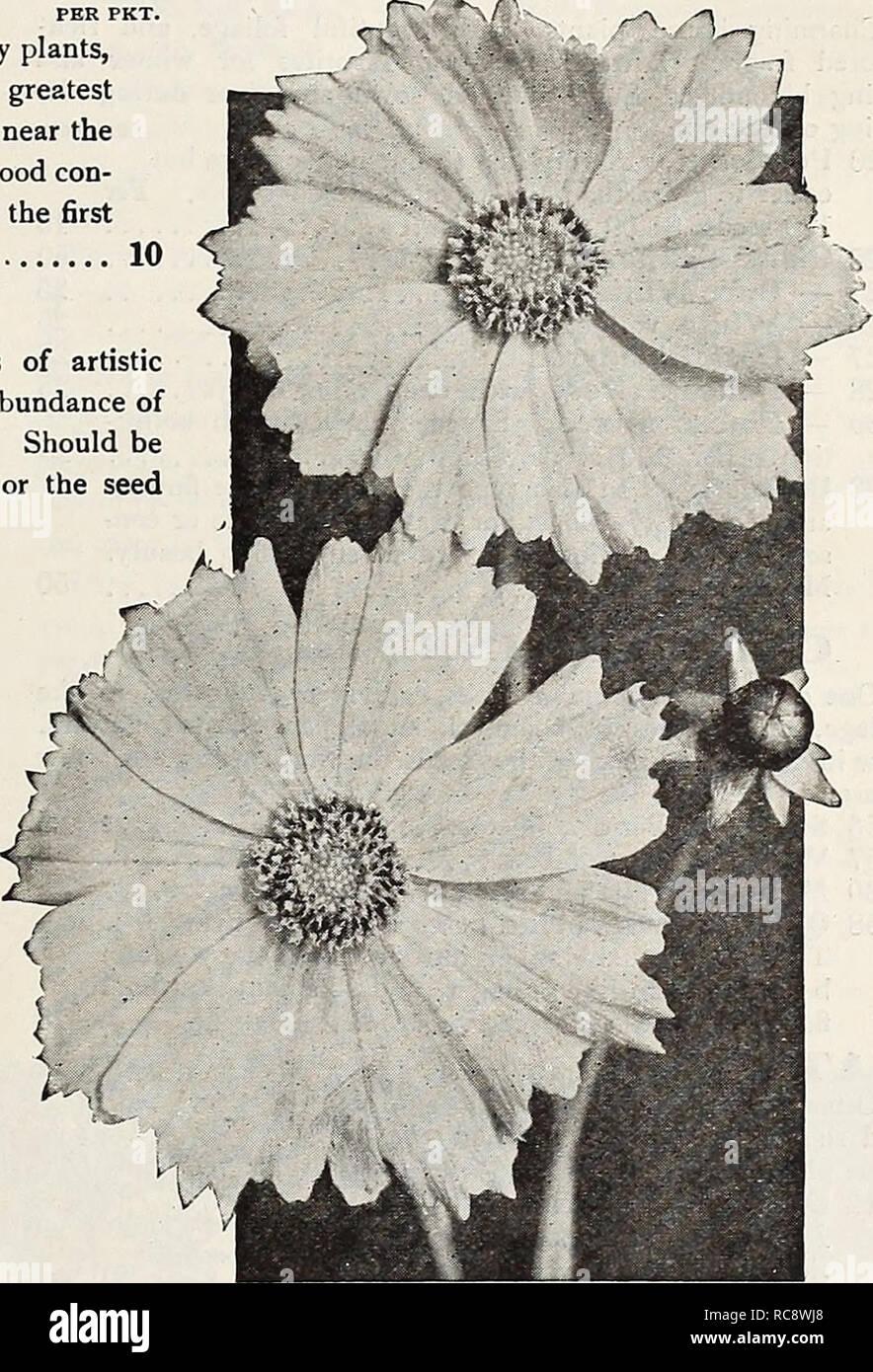 KüHn 35 Rose Samen White Blu...... Garten & Terrasse Elegant Und Anmutig Pflanzen, Sämereien & Zwiebeln