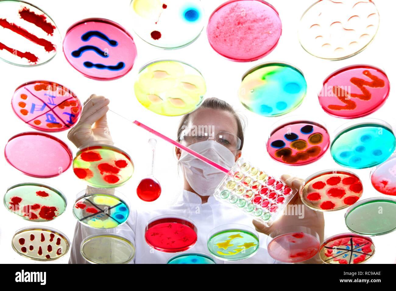 Analyse von bakteriellen Kulturen, Bakterien in der Petrischale wachsen Stockbild