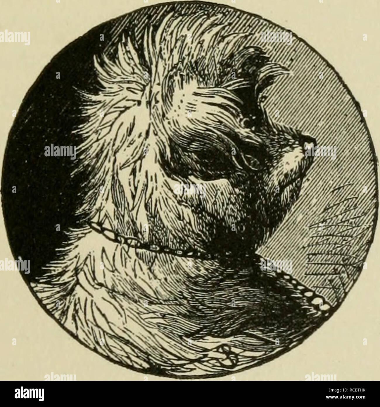 Die Hunde Von Großbritannien Amerika Und Anderen Ländern Hund