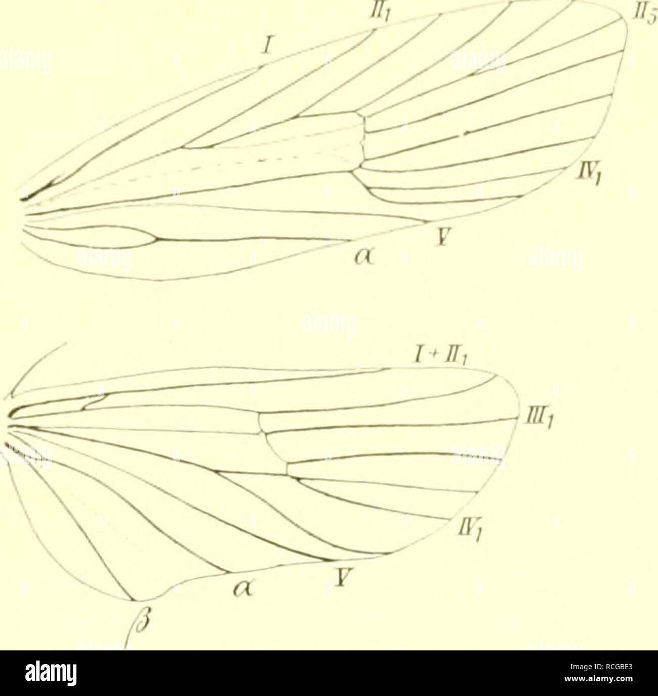 """. Die Schmetterlinge Europas. Lepidoptera; Raupen. WWIIl. F; niiilii'. Celp. Liii. lar l'nlcrfiniiilic'. Iinae Dcpressrii'. ; IH 3 14. {Â"""" yraiista /""""//. Vtl. mit 1 schwarz. Punkt: Ich. il. (Jueiaiier U. 2 Ich. il. Kurz; Il. scliieiien Braun, llleib v. (1. Mitte eine Koldf; Elb. Exp. 20 22 inni. In F. ngland, W-HuÃland, (Sibirien. Amurien); im Mai. R Grau mit orangefarb. Là ¤ ngsbande, das v. C. einem dunkelgrauen mit rund, schwarz. Flecken eingefaÃt ist; Seiten grau, orange gefleckt. Kopf glänzend schwarz. Im Juni, lvdi a. d. Blättern v. Thalictr. aciuilegifolium. Pr. Fto. 15. discrepit^ lla Rbl. V Stockbild"""