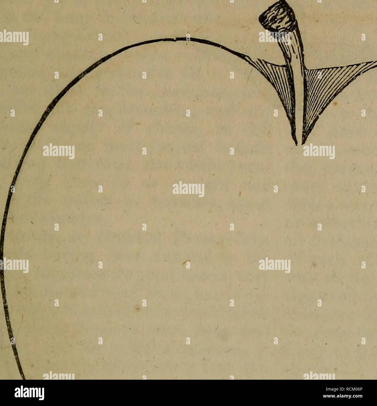""". Ein Wörterbuch der modernen Gartenbau. Im Garten arbeiten. APP 55 APP Abb. 16.- (S. 51.). Für viele der Pflanzen, die ich dadurch gewonnen haben, viel von dem Charakter des Apple besitzen, während sie vegetieren so früh im Frühling als die Krabbe von Sibe-Ria, und mindestens die gleiche Kraft des kalten Lager besitzen; und ich besitze zwei Pflanzen der Familie, die ganz so robust wie die meisten strengen Crab unserer Wälder."""" durch Stecklinge. - Alle Sorten können in diesem Modus angehoben werden, obwohl einige, wie der Grat-Knoten, Codling, und Juni - Essen, leichter als andere. Bäume so angehoben werden, sagte nicht so haftet wie Ihre p zu sein Stockbild"""