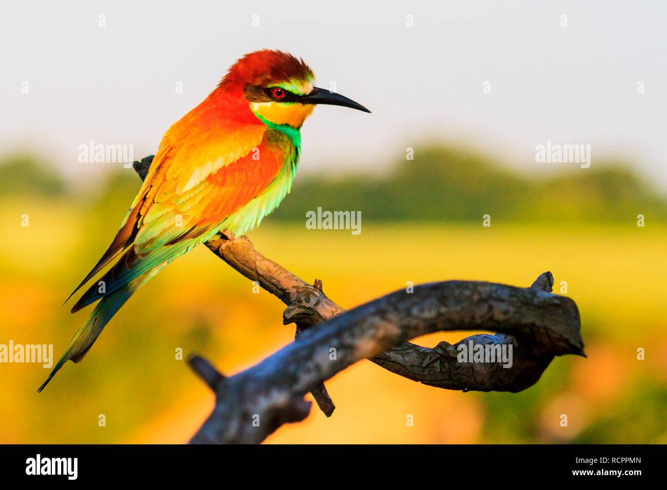 Verträumt schönen Vogel auf einem Zweig Stockbild
