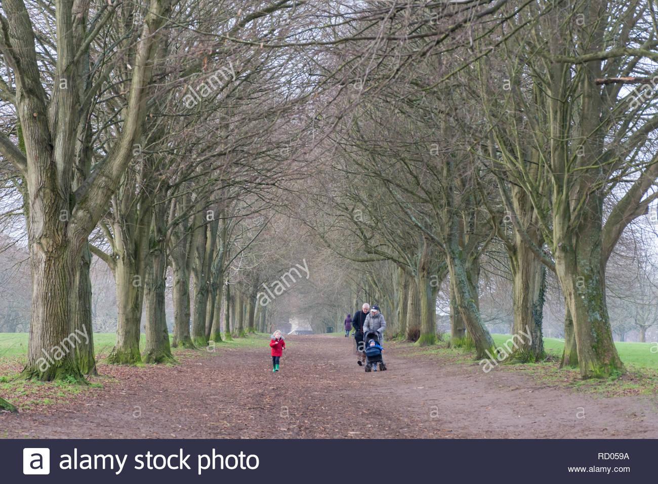 Menschen gehen für einen Winterspaziergang unter einer Allee von Bäumen im Park, Farnham, Surrey, Großbritannien. Alltag. Stockbild