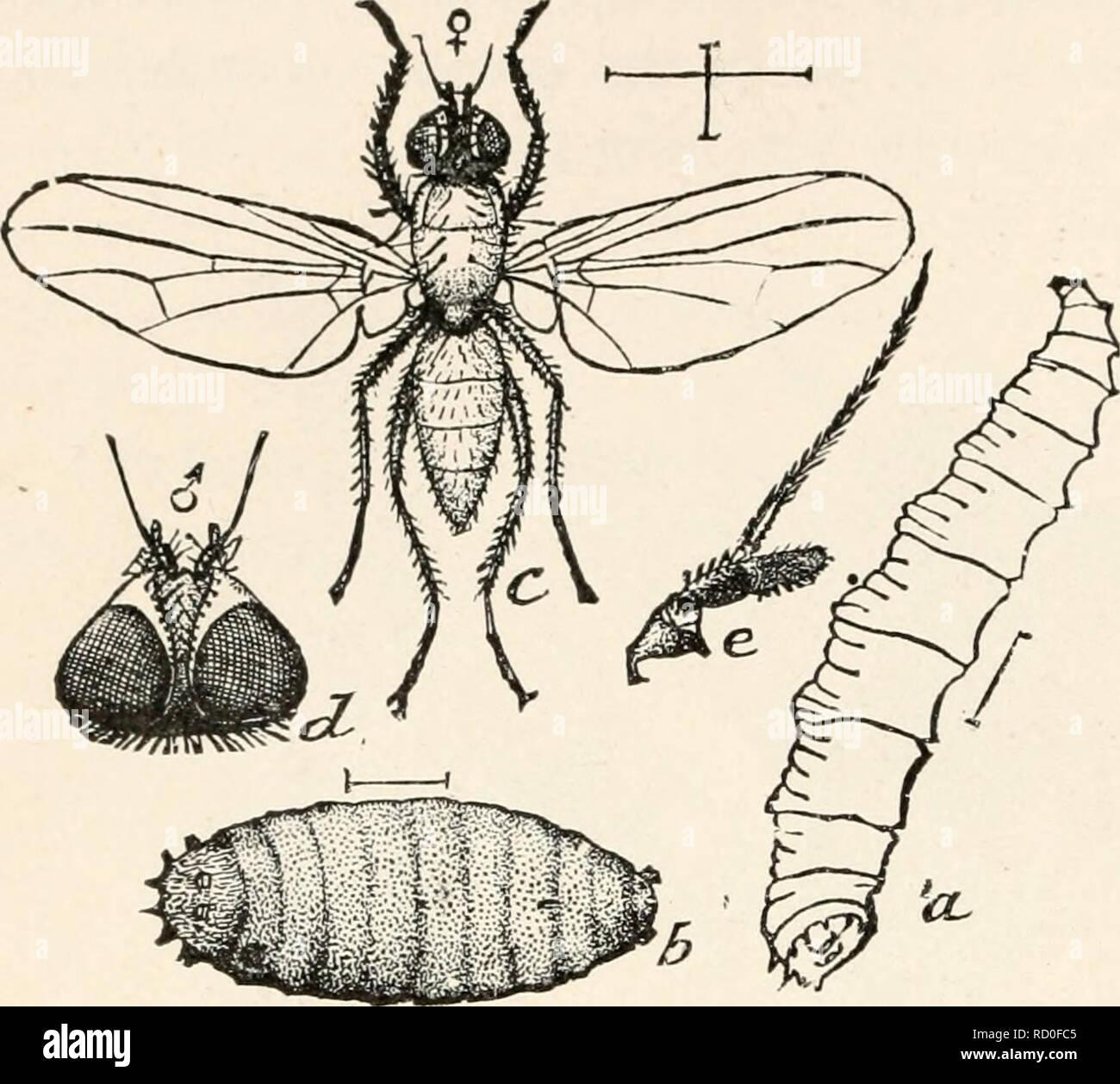Elementare Entomologie Insekten 238 Elementare Entomologie Die