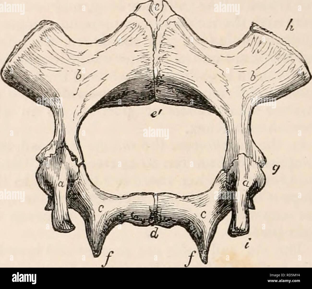 Die Cyclopaedia Von Anatomie Und Physiologie Anatomie Physiologie