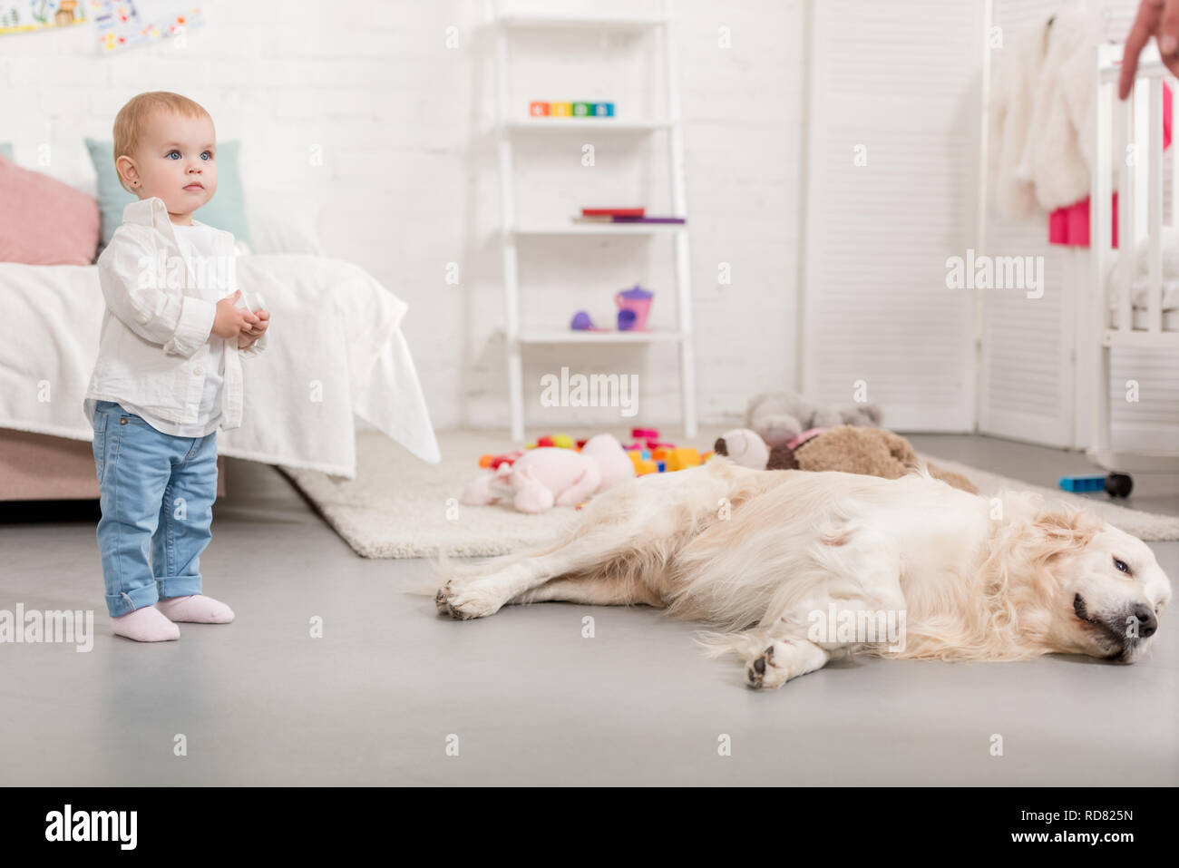 Fußboden Für Kinderzimmer ~ Adorable zicklein stehend und golden retriever liegen auf fußboden