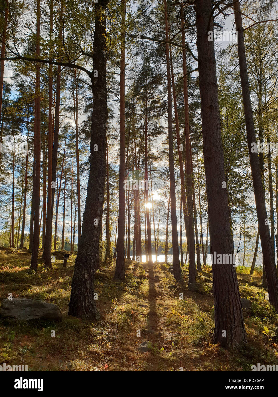 Bild des mystischen Sonne in den Wald mit den Schatten der Bäume während der Morgenstunden Stockfoto