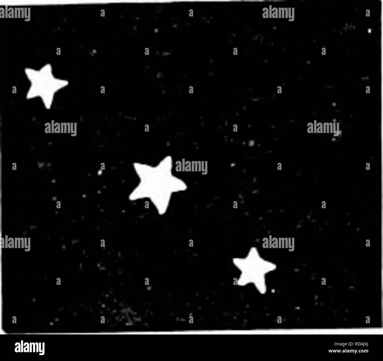 Antares stern
