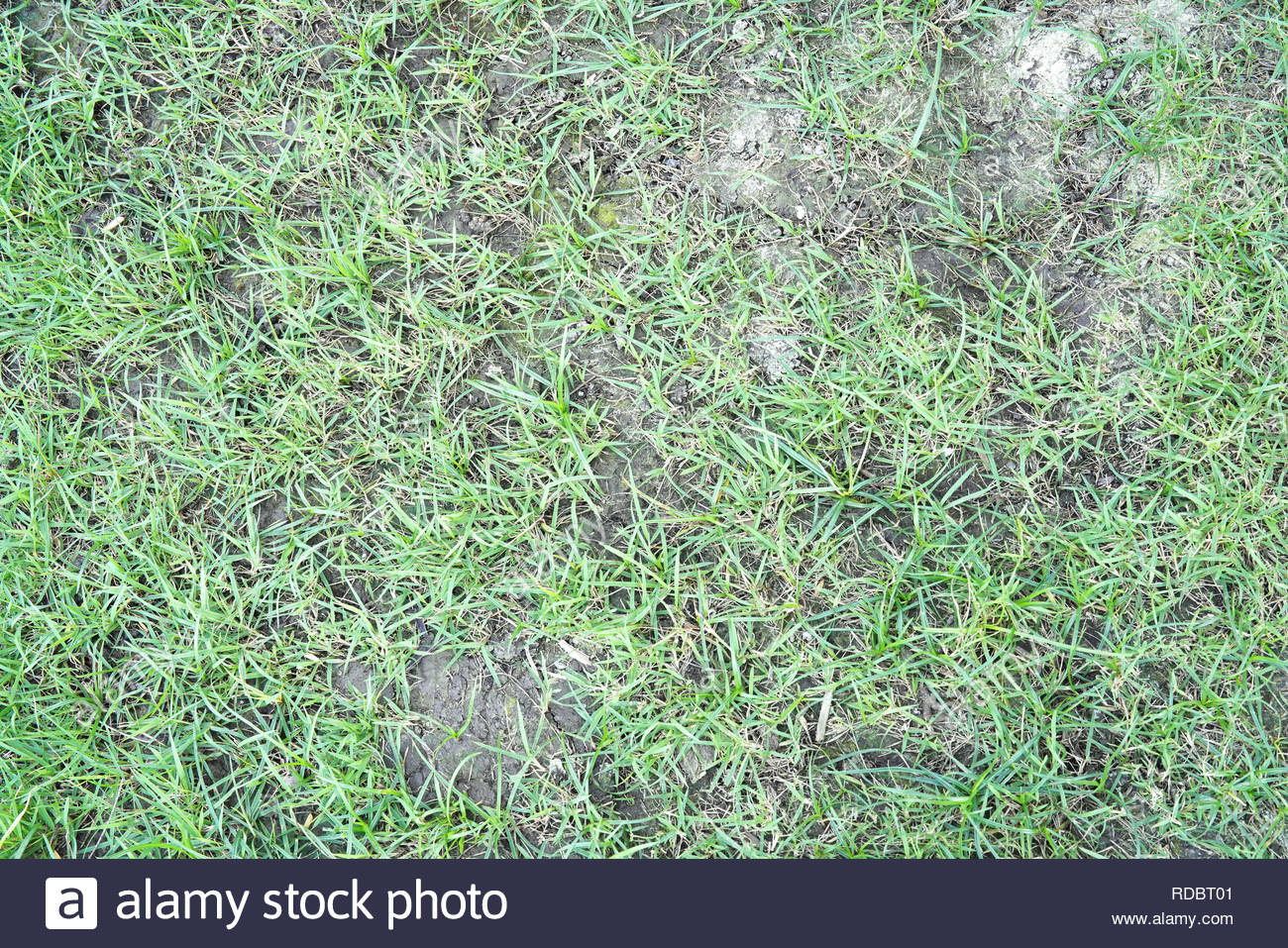 Fußboden Graß Essen ~ Natur gras auf dem boden hintergrund und textur stockfoto bild