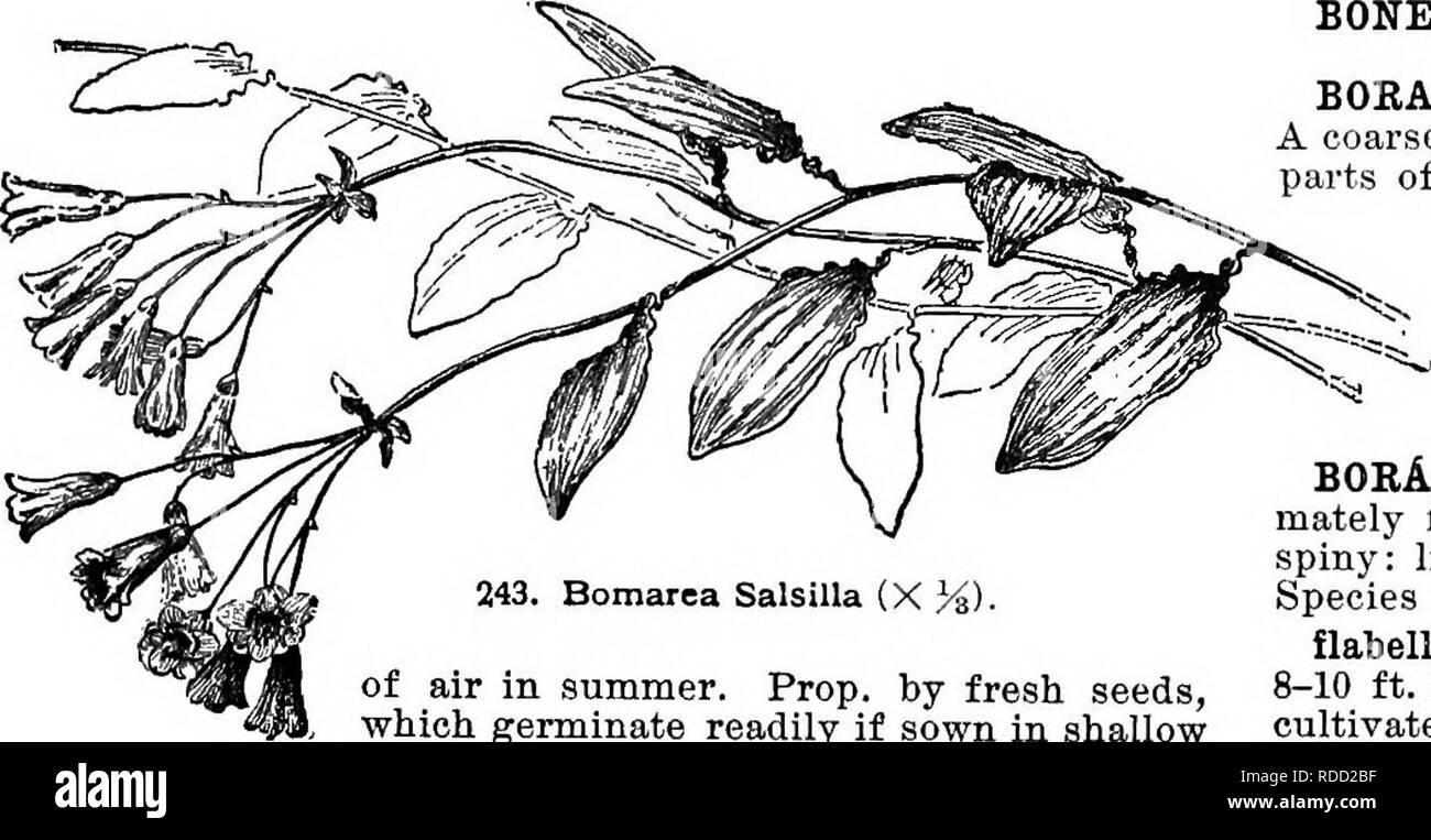 Cyclopedia Der Amerikanischen Gartenbau Bestehend Aus