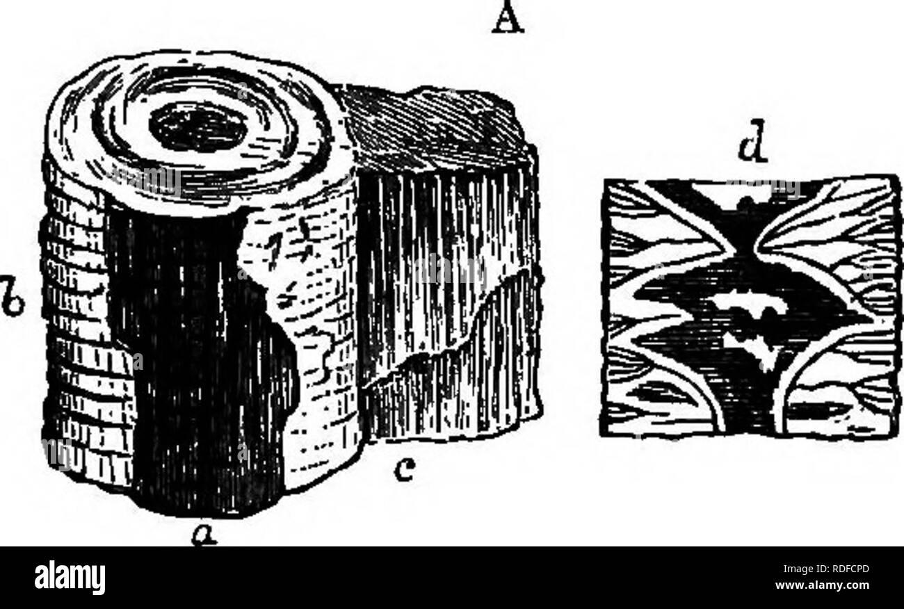 Irische Reifentradition