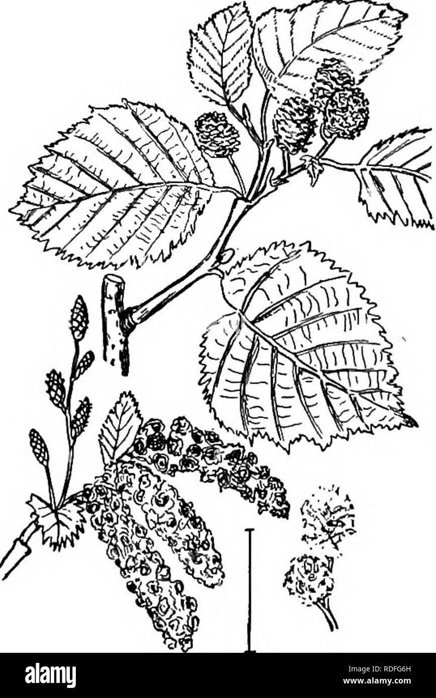 Oaks Plants Stockfotos Oaks Plants Bilder Seite 3 Alamy