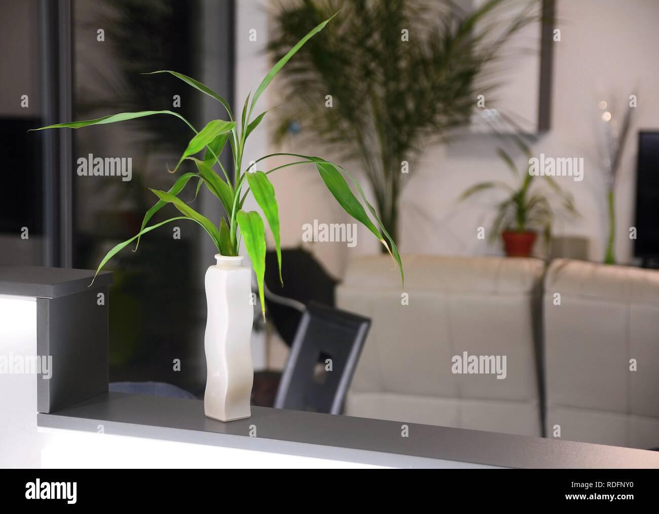 Modernes Wohnzimmer Interieur mit frischen grünen Pflanzen ...