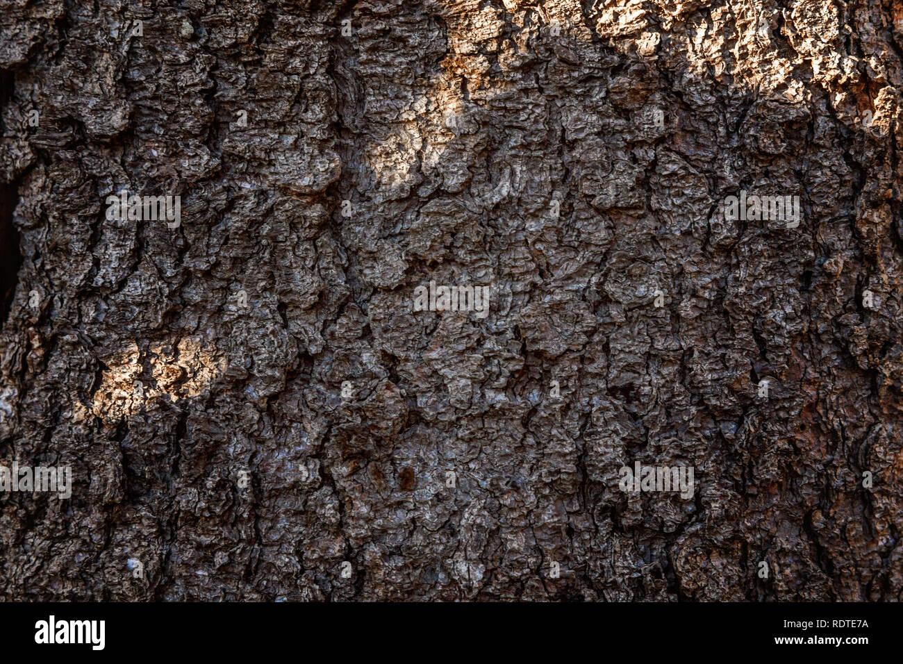 Bark Mulch Texture Stockfotos & Bark Mulch Texture Bilder