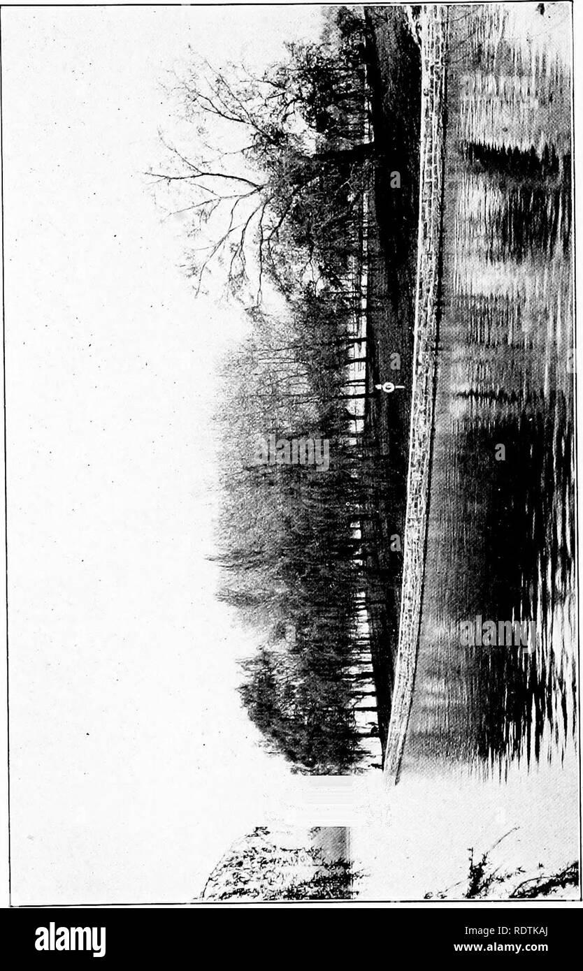 . Der Baum Buch. Bäume. . Bitte beachten Sie, dass diese Bilder sind von der gescannten Seite Bilder, die digital für die Lesbarkeit verbessert haben mögen - Färbung und Aussehen dieser Abbildungen können nicht perfekt dem Original ähneln. extrahiert. McFee, Inez N. (Inez Nellie Canfield), b. 1879. New York, Frederick A. Stokes Co. Stockbild